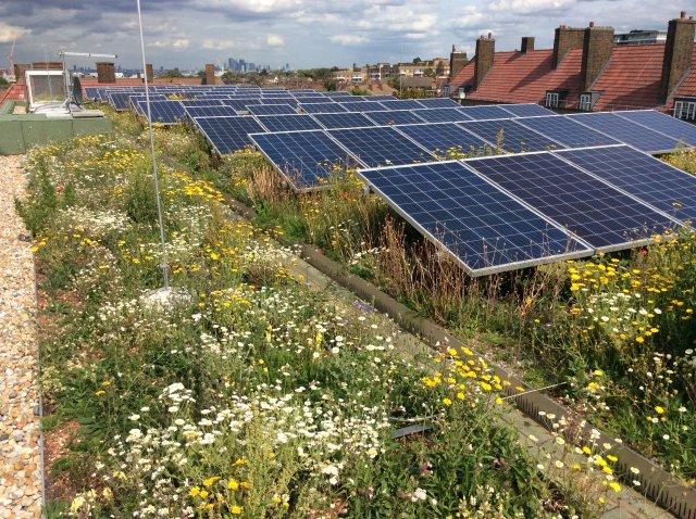 green_roof_solar