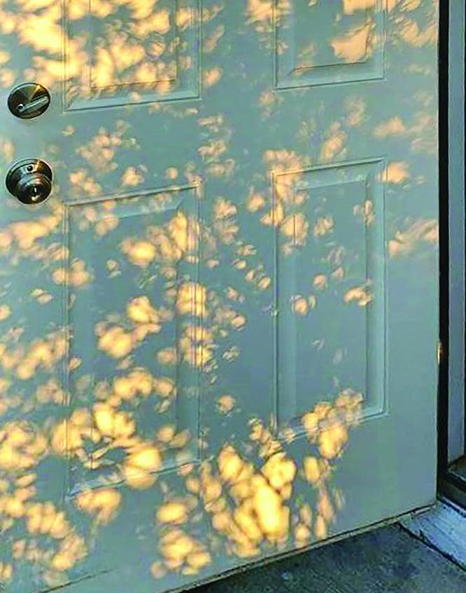 Lighting through leaves on a white door