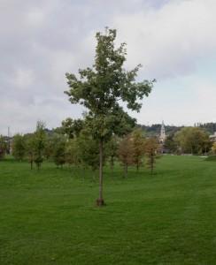 Eulachpark Winterthur