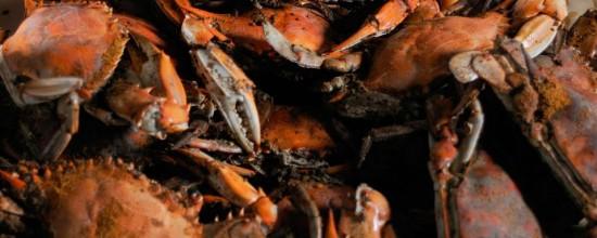 crabs_baltimore